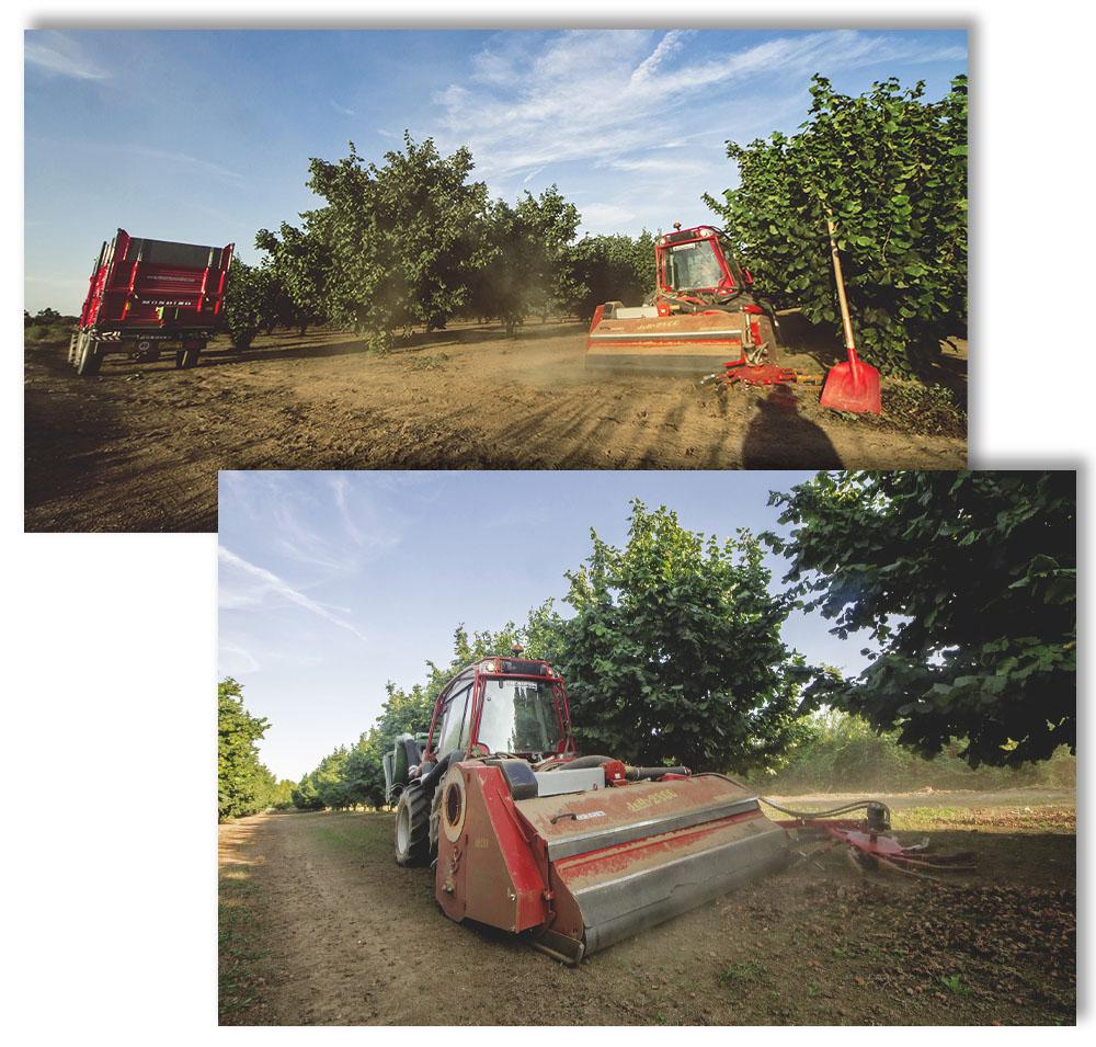 Piedmont IGP Hazelnut Collection Photo